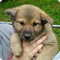 Adopt A Pet :: Chase*ADOPTION PENDING* - Mill Creek, WA