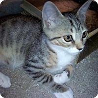 Adopt A Pet :: Babel - North Highlands, CA