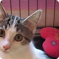 Adopt A Pet :: Elsa - Coos Bay, OR