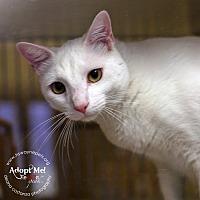 Adopt A Pet :: Brady - Lyons, NY