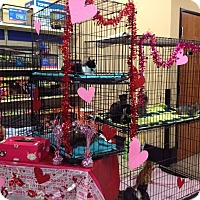 Adopt A Pet :: Kitties Petsense Griffin - McDonough, GA