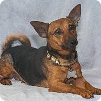 Adopt A Pet :: Maggie - Elmwood Park, NJ