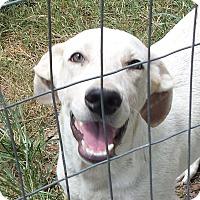 Adopt A Pet :: Huck AD 05-20-17 - Preston, CT