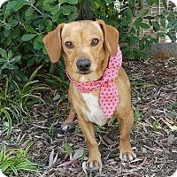 Adopt A Pet :: Sandy - Rancho Palos Verdes, CA