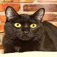Adopt A Pet :: KING RICHARD - Alameda, CA