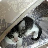 Adopt A Pet :: Dot - Wichita Falls, TX