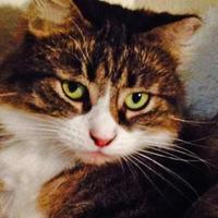 Adopt A Pet :: Charmin - Chandler, AZ