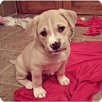 Adopt A Pet :: Buster - Brooklyn Center, MN