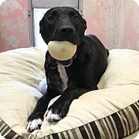 Adopt A Pet :: Miles - Chico, CA