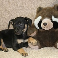 Adopt A Pet :: Taco - Greenwich, CT