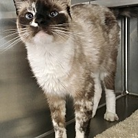 Adopt A Pet :: Jezebel - Oakdale, CA
