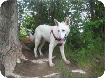 German Shepherd Dog Mix Dog for adoption in Calgary, Alberta - Sophie
