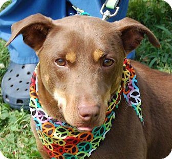 Dachshund Mix Dog for adoption in Hot Springs, Arkansas - Frankie