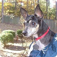 Adopt A Pet :: Marlie - North Little Rock, AR