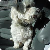 Adopt A Pet :: Frankie - Shawnee Mission, KS