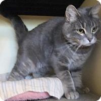 Adopt A Pet :: Farrah - Edmonton, AB