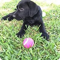 Adopt A Pet :: Star -Adopted! - Croydon, NH
