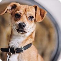 Adopt A Pet :: Dory - Portland, OR