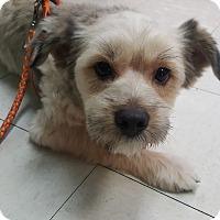 Adopt A Pet :: Luke - La Mirada, CA