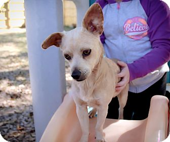 Terrier (Unknown Type, Small) Mix Dog for adoption in Vidor, Texas - Cobb