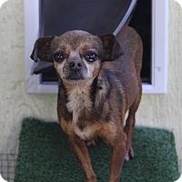 Adopt A Pet :: Gracie - Kempner, TX
