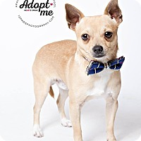 Adopt A Pet :: Bon Bon - Apache Junction, AZ