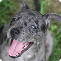 Adopt A Pet :: Tasoro - Groton, MA