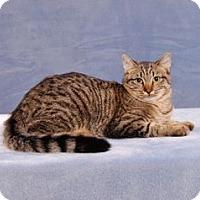 Adopt A Pet :: Moondance (Extra Shy) - Cary, NC