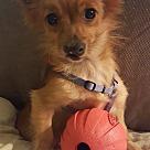Adopt A Pet :: Yoda