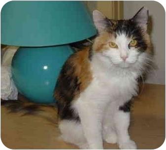 Calico Cat for adoption in Spencer, Iowa - Clarissa