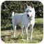 Photo 4 - Spitz (Unknown Type, Medium) Mix Dog for adoption in Southern California, California - HwanHei - C