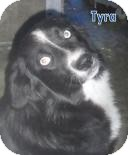 Border Collie Mix Dog for adoption in Georgetown, South Carolina - Tyra