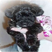 Adopt A Pet :: Maggie - Evansville, IN