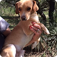 Adopt A Pet :: Douglas - San Antonio, TX