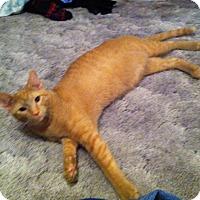 Adopt A Pet :: Roman - St. Louis, MO