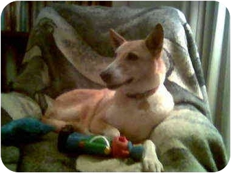 Collie Dog for adoption in Gardena, California - Penny