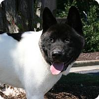 Adopt A Pet :: Moose - Virginia Beach, VA