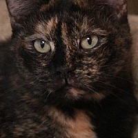 Adopt A Pet :: Janie - Savannah, MO