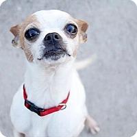 Adopt A Pet :: Luka - Austin, TX