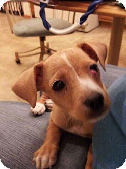 German Shepherd Dog Mix Dog for adoption in Denver, Colorado - Louise Brooks