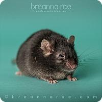Mouse for adoption in Sheboygan, Wisconsin - Bear