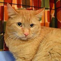 Adopt A Pet :: Elsey - Logan, UT