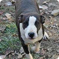 Adopt A Pet :: LADY - Sherman, CT