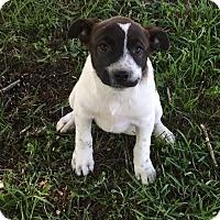 Adopt A Pet :: Garnet - Blountstown, FL