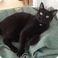 Adopt A Pet :: Bennett - Cashiers, NC