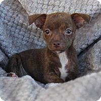 Adopt A Pet :: Marina - Yuba City, CA