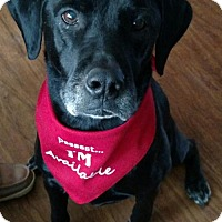 Adopt A Pet :: Bonita - Coldwater, MI