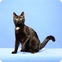 Adopt A Pet :: Precious - Cary, NC