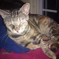 Adopt A Pet :: Smack-ums - Goldsboro, NC