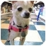 Photo 2 - Chihuahua Dog for adoption in Los Angeles, California - ZOOEY